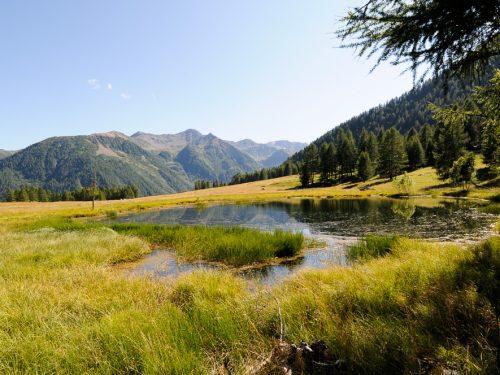 Covel in Val di Pejo